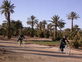 Bike circuit in Ferkla oasis, Tinejdad, south Morocco.